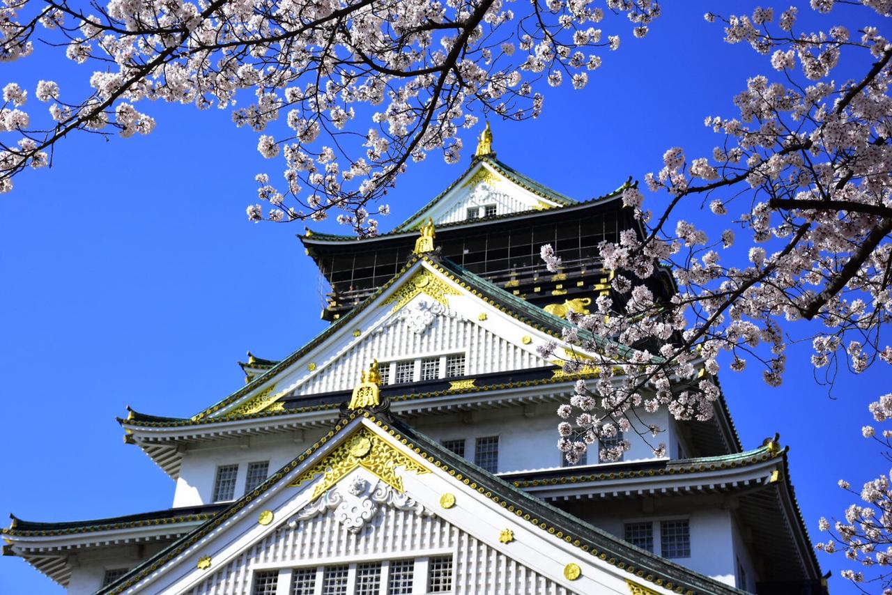 桜の名所 大阪城